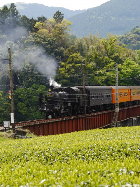 SLと茶畑(崎平)